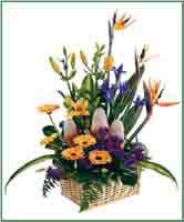 'Best' Ireland Florists In Cork - Dublin - Limerick - Waterford - Galway
