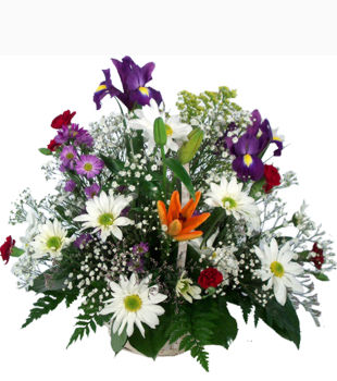 Best Irish Florists & Flowers Ireland - Click Here !